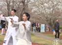 视频 | 春风十里 当樱花遇到太极……