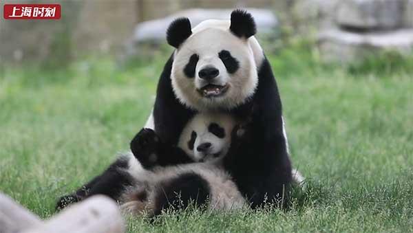 视频 | 萌萌的母爱!动物园里亲子互动超有爱