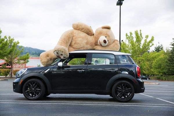 Costco上海店马上要开!已经有人晒出会员卡,还有加大号泰迪熊!