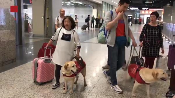 视频 | 一起去旅行!五条导盲犬结伴带主人乘火车去北京