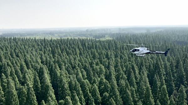 见所未见|零污染零残留!航拍沪郊飞机治森林虫害