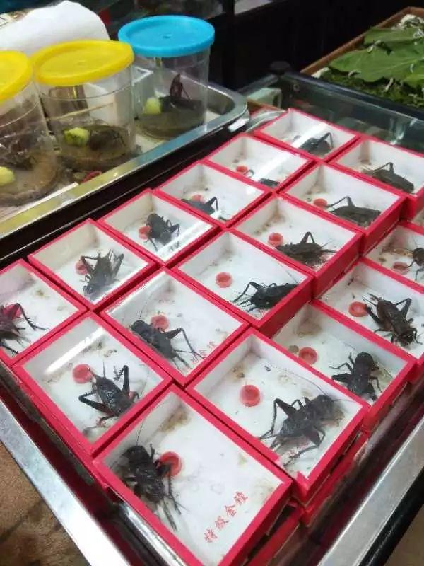 夏虫竟可以语冰?现在的花鸟市场真让人大开眼界