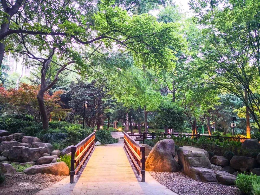 上海市中心的天然氧吧!宛如走进绿光森林!24小时开放!