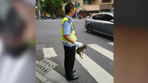 视频 | 调皮小猫钻车底 路口辅警伸援手