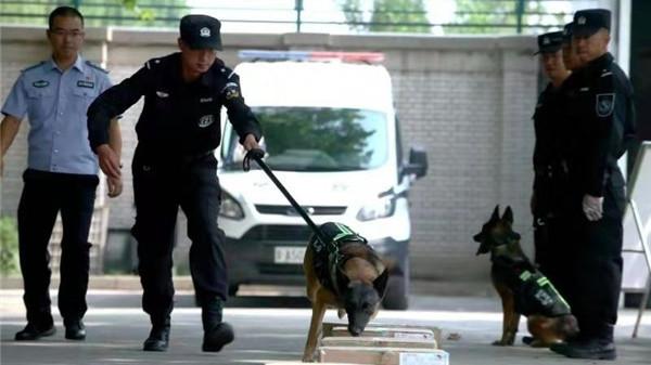 中国警犬又添新技能 可搜索新型炸药与枪弹