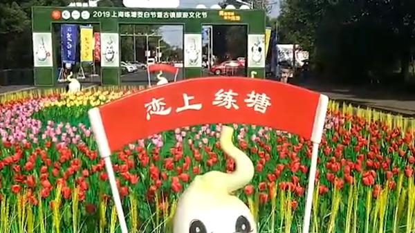 视频   练塘古镇迎客来 茭白节打响乡村旅游品牌