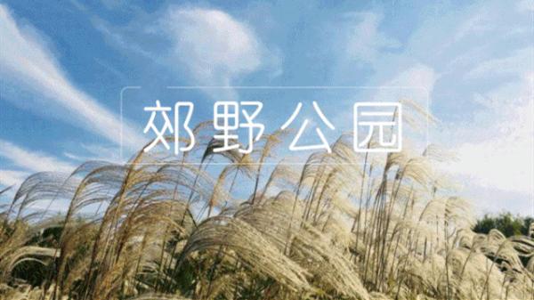 收藏!国庆黄金周,上海各大郊野公园怎么玩