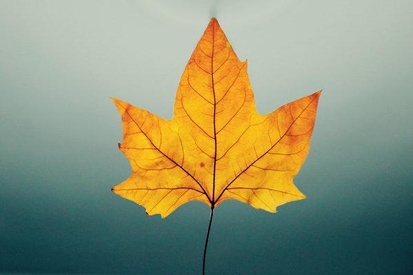 晨读   秋天的叶