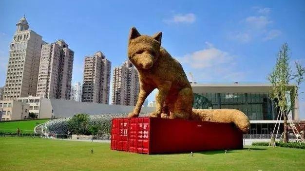 """""""我大狐狸又回来啦!""""从市中心搬到郊区后,它的眼神已不再忧郁"""