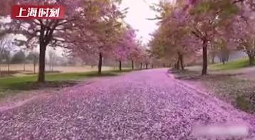 视频 | 来吧,看辰山植物园里落英缤纷
