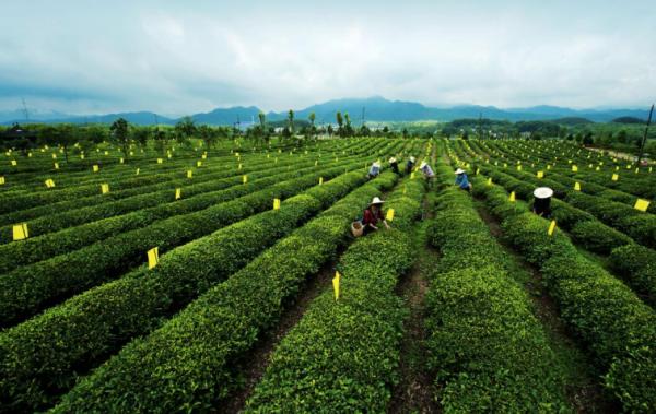 """拼多多启动首届""""好茶不贵""""多多春茶节,补贴1亿联合百余茶企推千款新茶"""