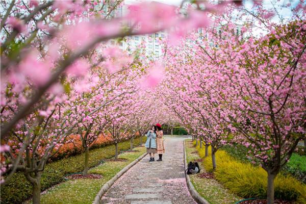 视频 | 海棠花开 人民公园1500余株海棠花进入最佳观赏期