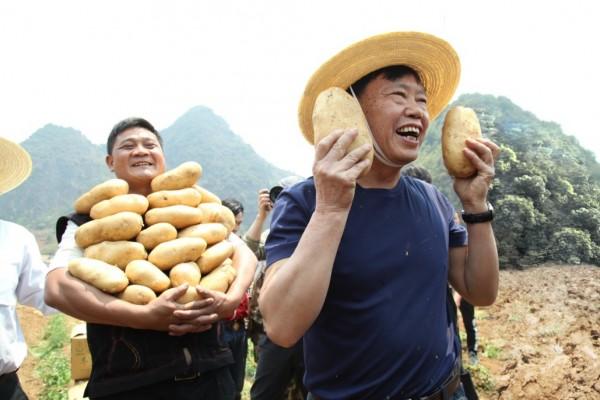 """""""农民院士""""朱有勇农田直播挖土豆 拼多多""""带货""""一小时售罄25吨"""