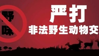 非法收购、出售珍贵、濒危野生动物犯罪案