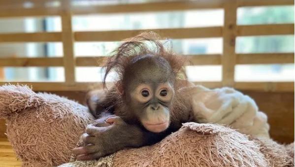 """萌化你心!上海动物园新添了这么多""""小可爱"""""""