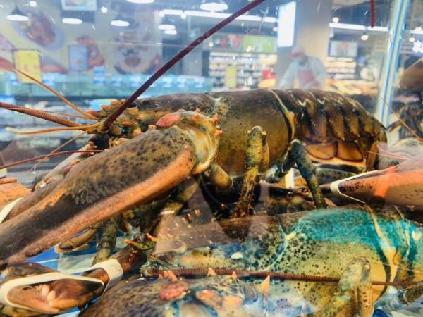 """五五购物节,""""家乐福环球美食季暨葡萄酒节""""重磅福利来了,家乐福加拿大龙虾直播"""