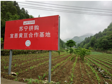 苏宁张近东:乡村振兴必须依靠年轻人
