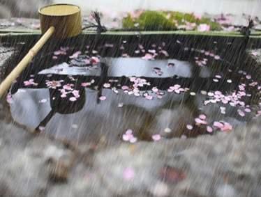 晨读 | 唱吧,雨季