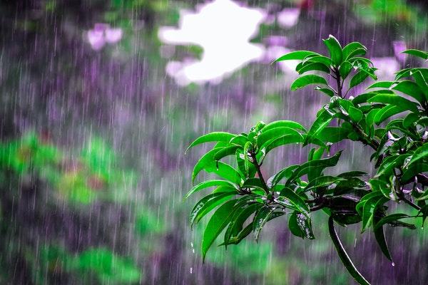 晨读   梅子黄时雨