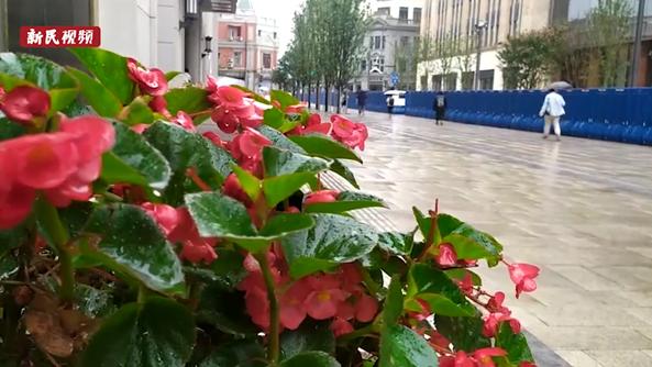 视频   上班又遇大雨 上海发布暴雨蓝色预警