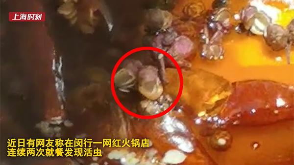 """视频   职业战队成""""职业诈骗""""?上海一火锅店4天2次吃出活虫后续:店家认错并赔偿"""