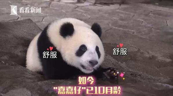 一起给这个上海小囡取名字吧!10个月大,体重已超72斤了...