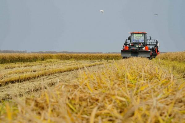 未来农业什么样?碧桂园北大荒的这家无人化农场提前剧透!