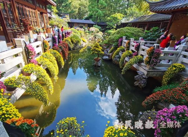 上海植物园菊花精品展