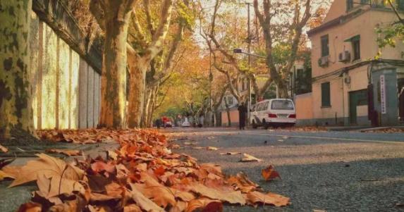 秋日里的美好!乐动体育71岁阿姨用落叶作画,开个人画展!