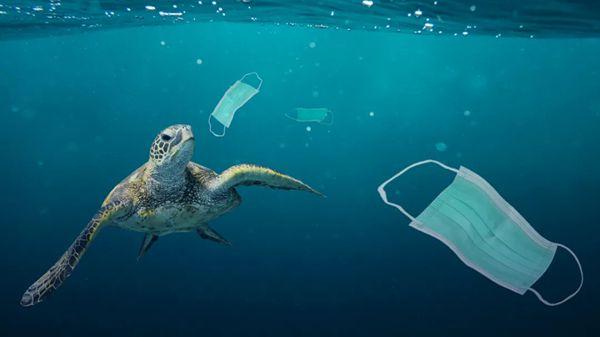当海洋中的口罩比水母还多,人类该如何面对这场酝酿中的垃圾危机?