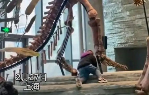 """上海自然博物馆,""""熊孩子""""爬到恐龙脚下玩耍!家长竟在边上干这事!"""