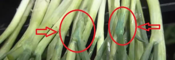上海爷叔买来小葱,煮完浮蓝沫!它到底是什么成分?
