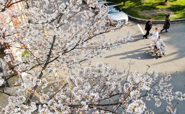 杏林春暖 这里的美景抚慰人心