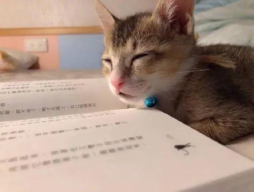 教育部出手了!明确规定中小学生睡眠时间!网友:?作业和考试会同意吗?