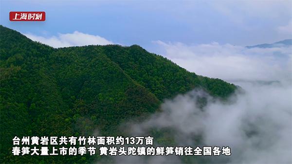 """当季新鲜的""""百搭菜""""来了!台州黄岩的春笋大量上市!"""
