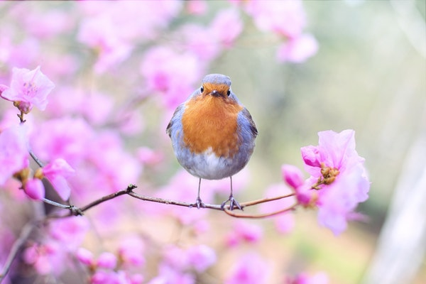 晨读 | 春风沉醉花博园