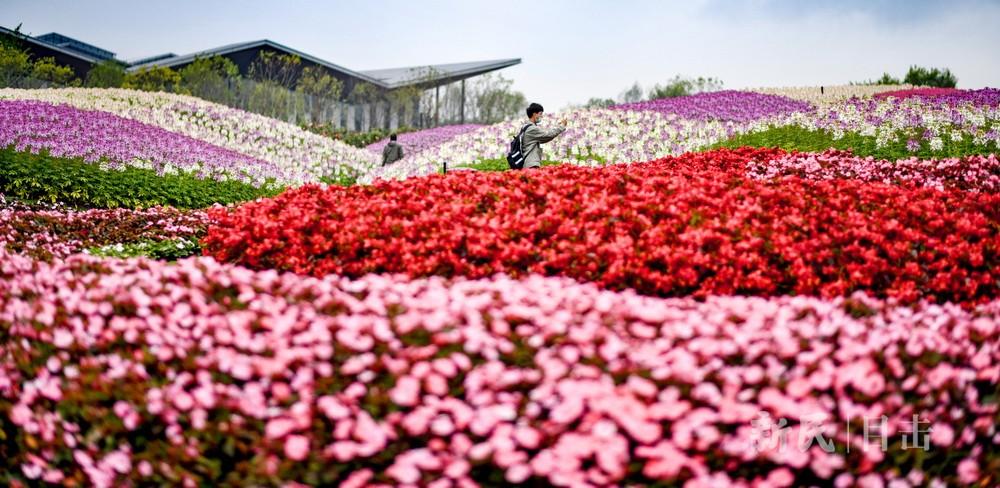 胜日寻芳花园 无边光景大美