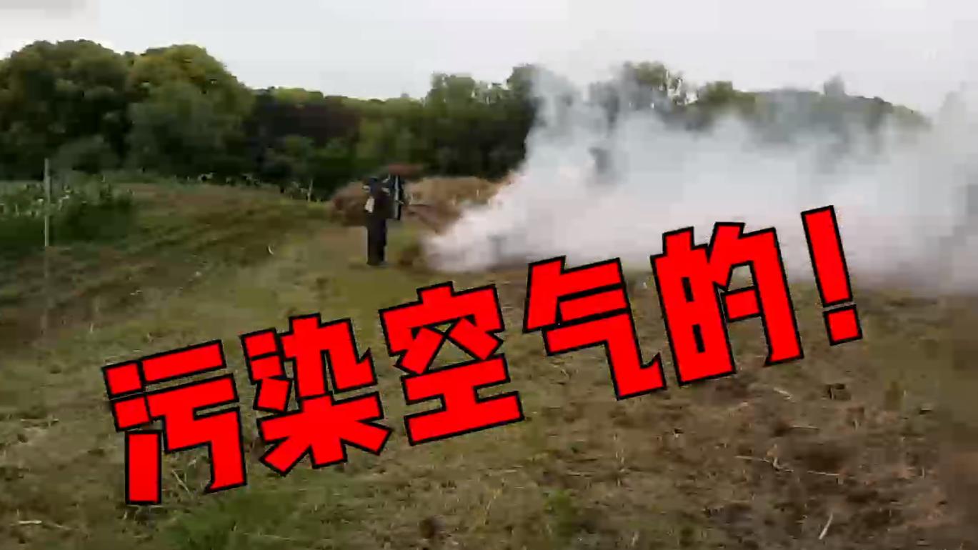 视频 | 白日起黑烟!上海浦东一村民田头烧秸秆 城管队员现场制止扑灭火源