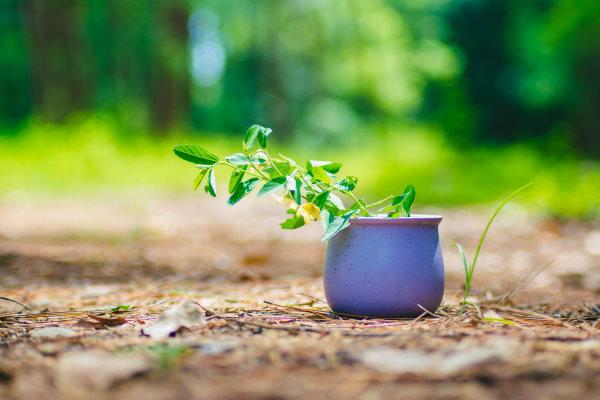 晨读|做一株植物