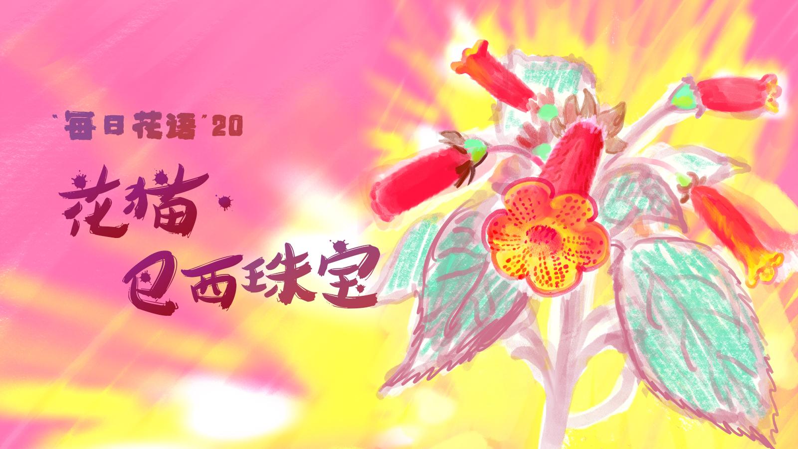 手绘花博会 | 每日花语(20):花猫·巴西珠宝
