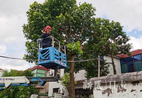 修剪树枝 排除安全隐患