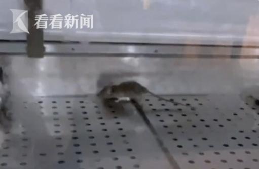 哈尼心!上海知名连锁熟食店老鼠乱窜!网友:巨贵还以为很卫生...