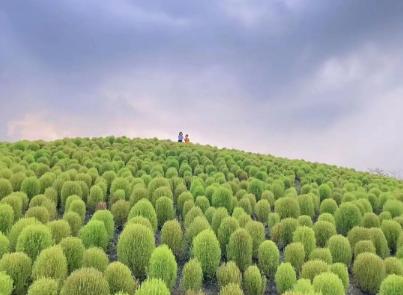 """上海居然有座""""毛球王国""""!面积比去年更大!还能把圆滚滚的它带回家!你心动了吗?"""
