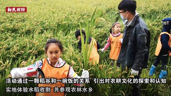 视频 | 开镰割稻 田间劳作 这堂亲子课让孩子们体会粮食的来之不易